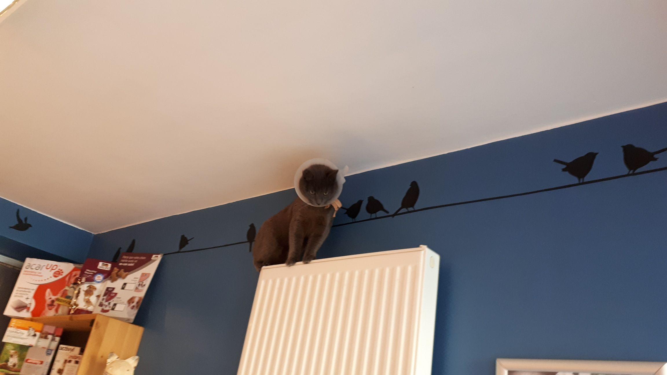 veterinaire-galerie-belgique (1)