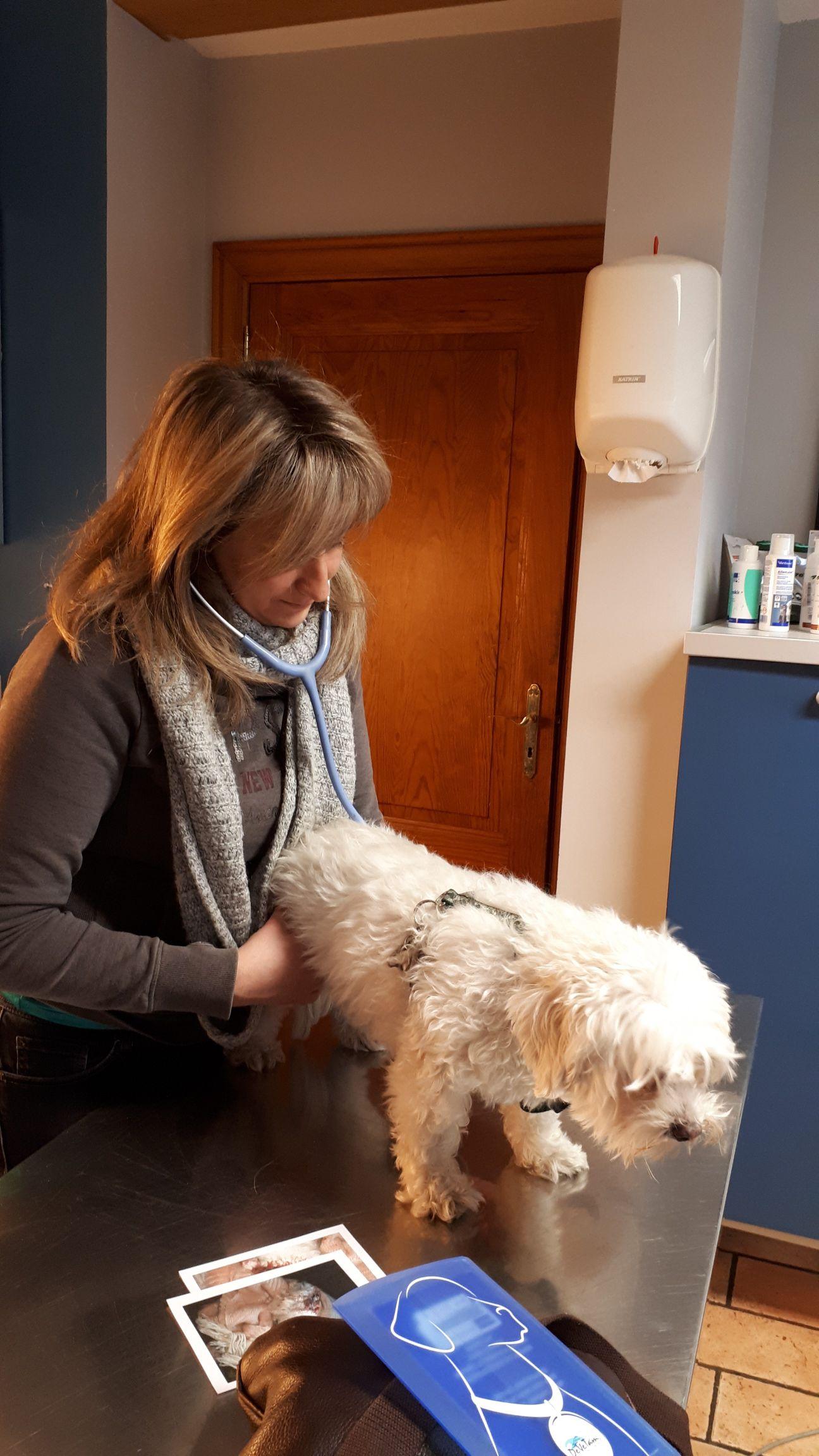 veterinaire-galerie-belgique (12)