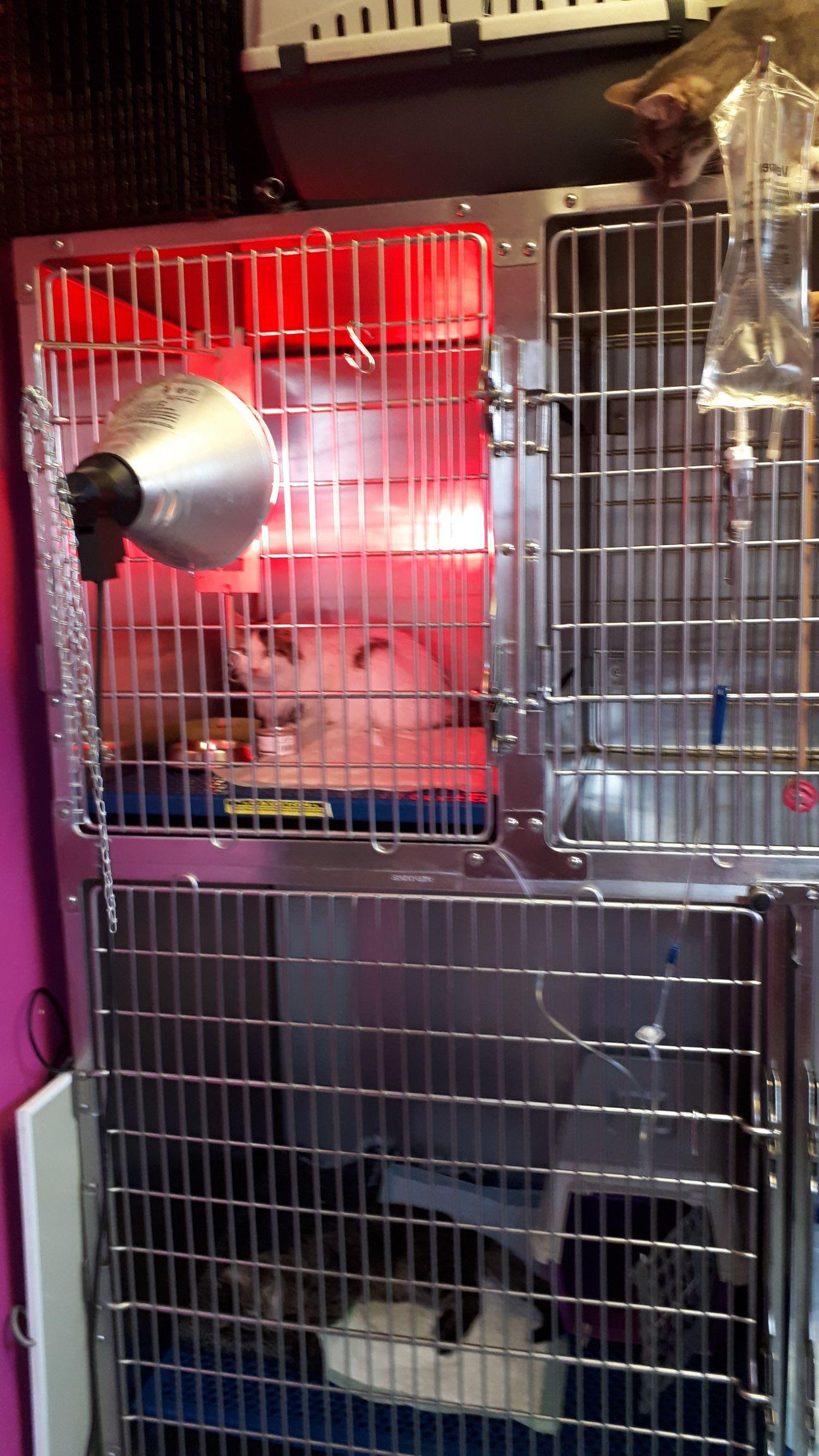 veterinaire-galerie-belgique (3)